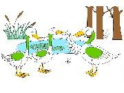 Kachničky